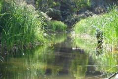Fly-Fishing-Coxs-River