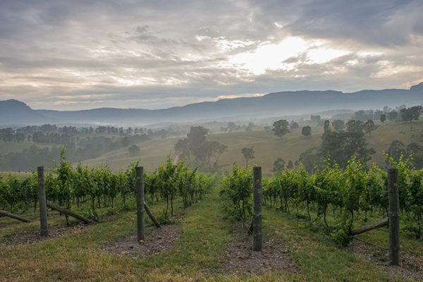 dry ridge estate a boutique winery in the megalong valley blue mountains with spectacular scenery